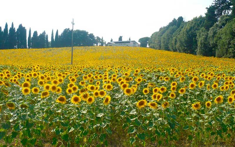 O que fazer na Toscana (Foto: Passeios na Toscana)